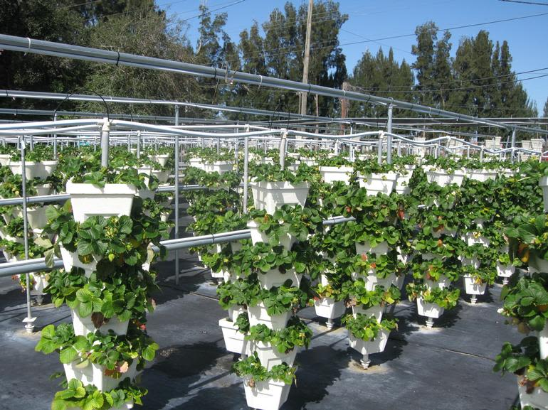 HYDRO HARVEST FARMS - Hydroponic Towers Growing all of our pesticide free veggies and fruit