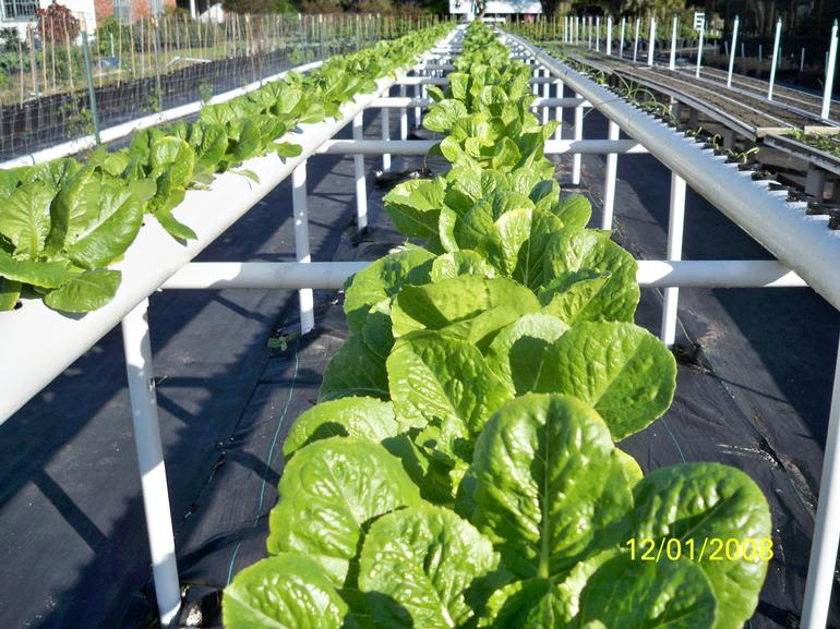 Fort Lonesome Farm - Yes we grow in hydroponics too!