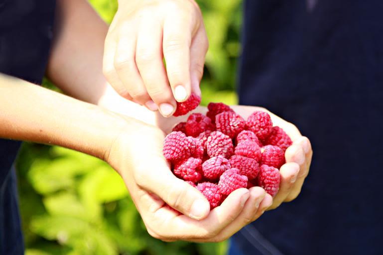 Zekveld's Garden Market - Fresh raspberries in season. U Pick is available in season.