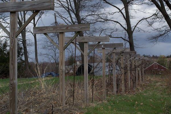 Meadow Mist Farm - Grape Trellis producing pesticide free Concord Grapes and More at Meadow Mist Farm