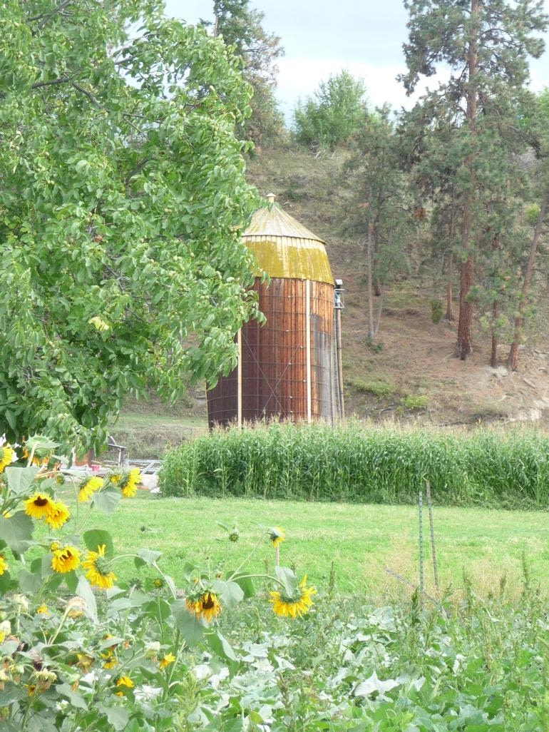 McMillan Farms - A photo of our old silo as seen across the hayfield and cornfield.