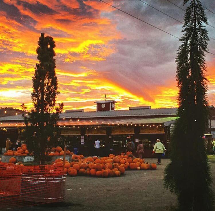 Bella Organic Farm - Image 35