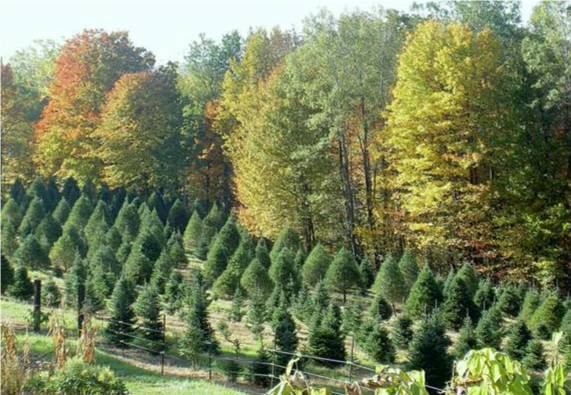 Crane Hill Tree Farm - Image 0