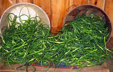 Meadow Mist Farm - Garlic Scapes My Favorite!