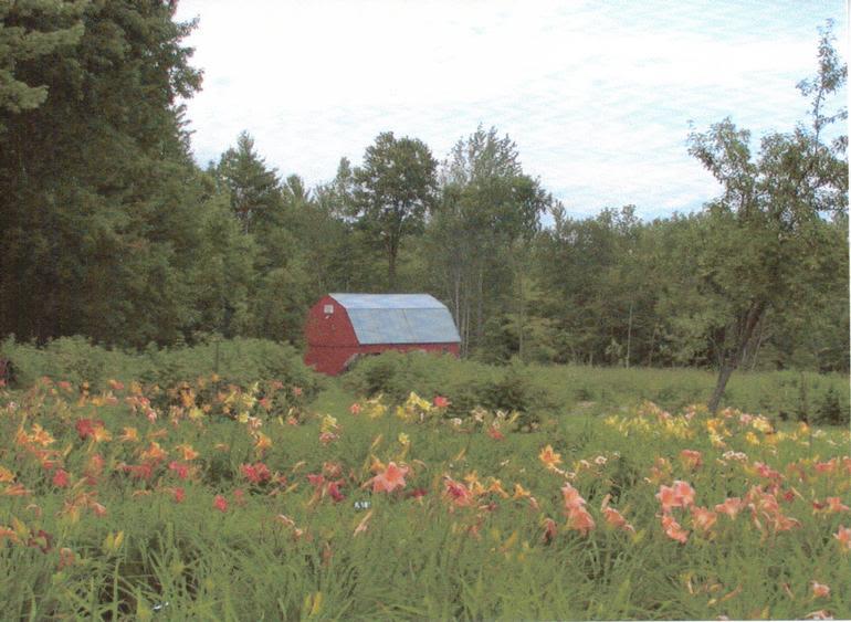 Milkcan Corner Farm - Image 3