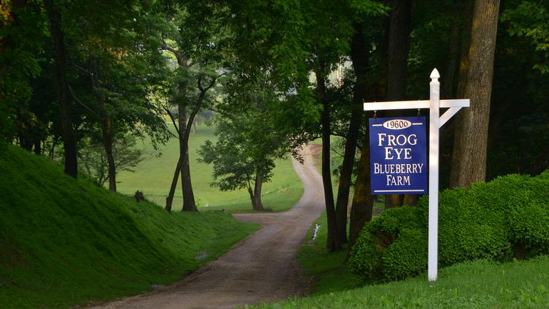 Frog Eye Farm - Welcome to a blueberry picking adventure...