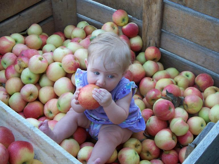 Hinton's Orchard & Farm Market - Image 1