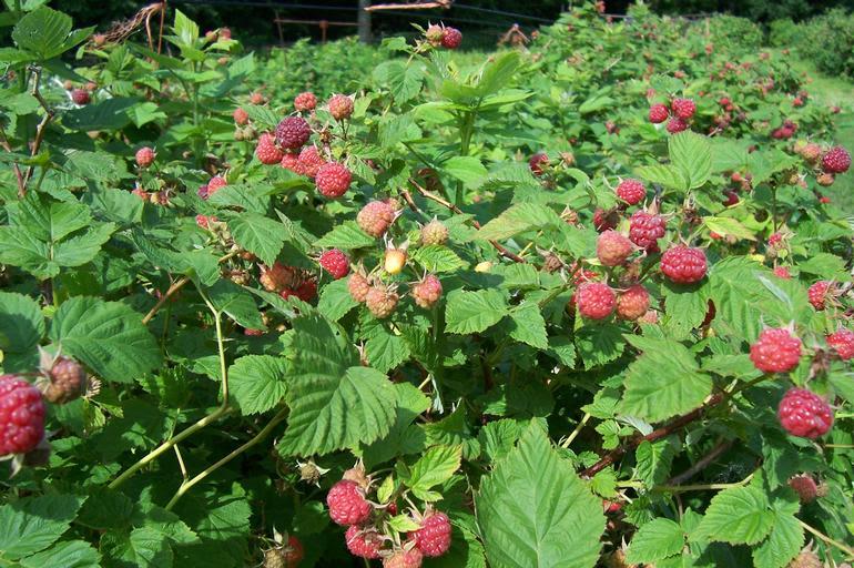 Riverfront Berry Farm - Image 1