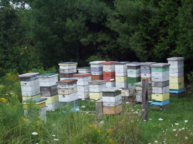 Dickey Bee Honey Inc - One of Dickey Bee Honey Bee yards