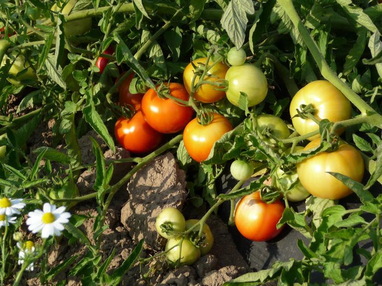 Karam Farm And Garden - Image 3