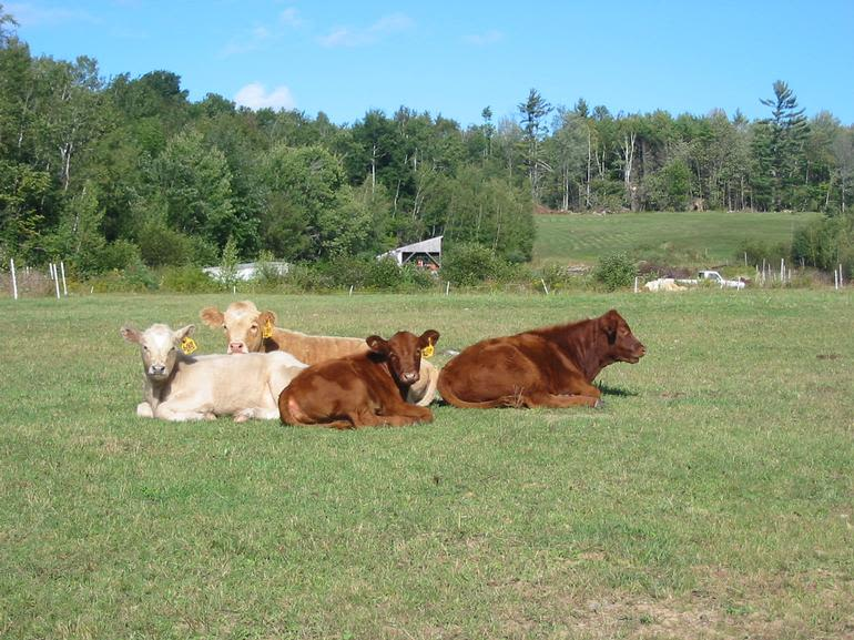 Moore Farm - Image 2