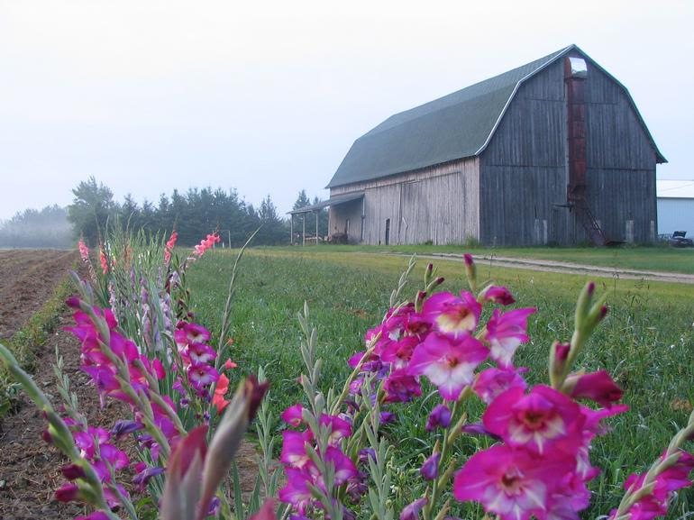 Merry's Berries -  Look for the Merry's Berries sign at intersections approaching our farm.  When you get to the barn with the green roof you have arrived