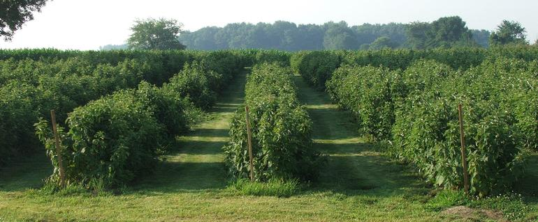 Mitchells Berries, LLC - Image 0