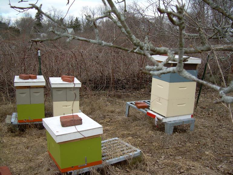 Meadow Mist Farm - Bee Hives Equal Raw Honey At MMF