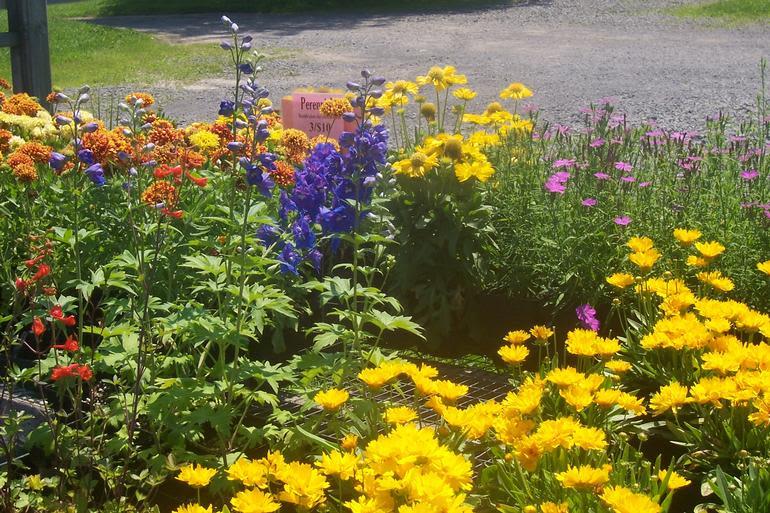 Brick House Acres - Big, beautiful perennials