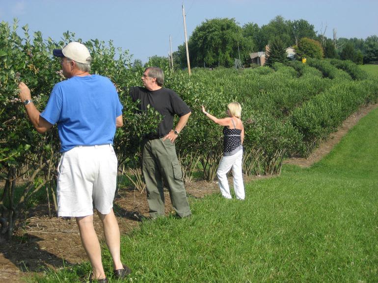 Rolling Ridge Berry Farm - Some friends picking