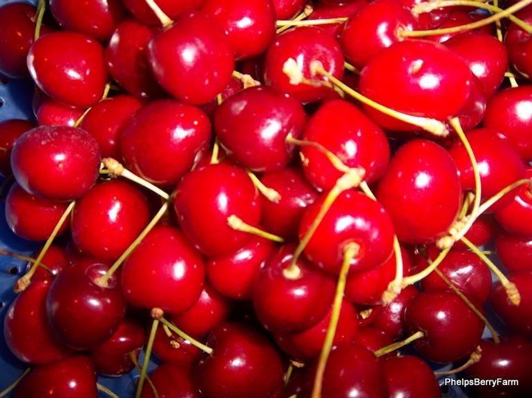 Rocky Top Fruit - Image 7