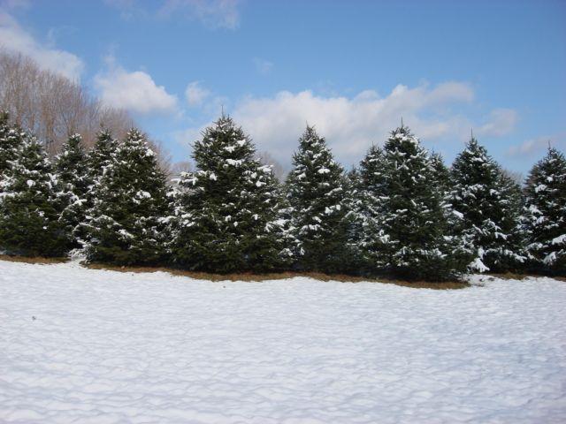 Goulden Ridge Farm - Image 8