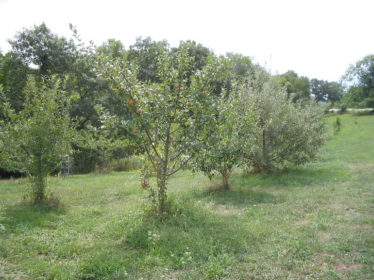 Burr Oak Farm LLC - This is a summertime view of a small portion of our orchard which might be seen from the road.