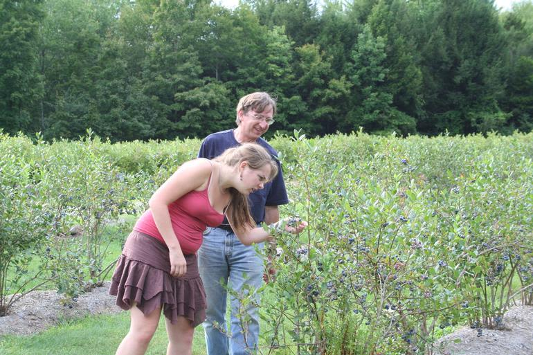 Sunshine Valley Berry Farm - Blueberry pickers
