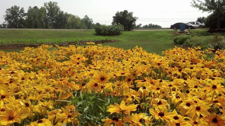 Bush-N-Vine Farm - Image 3