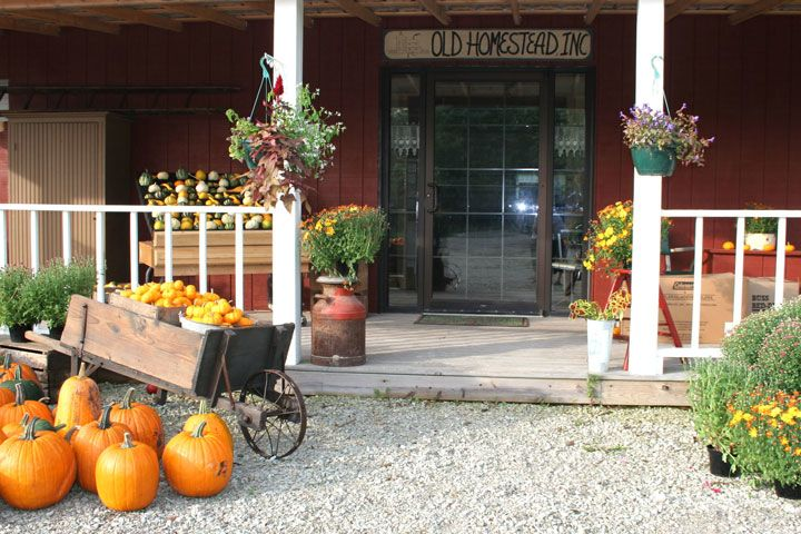 Old Homestead Orchard - Main Entrance to the Orchard Store at Old Homestead in October - lots of pumpkins!