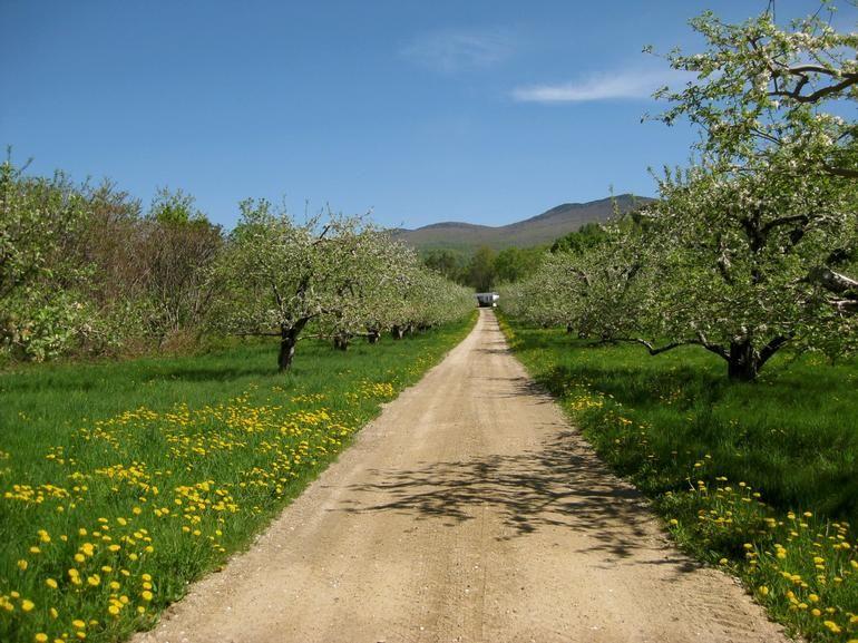 Mendon Mountain Orchards & Motel - Image 5