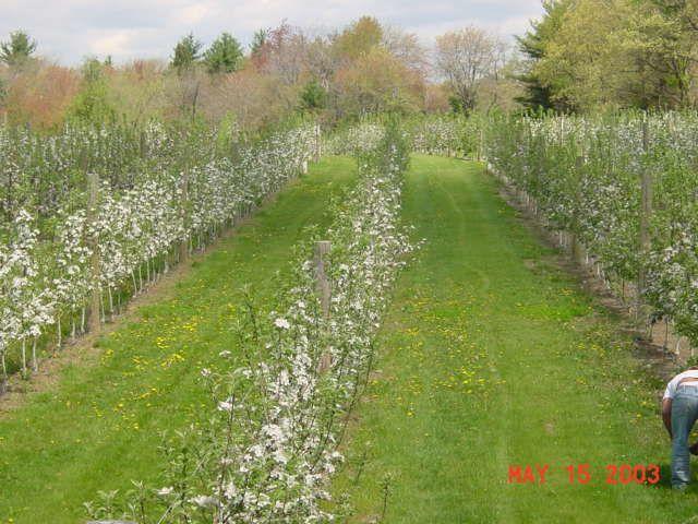 Highland Farm - Image 3