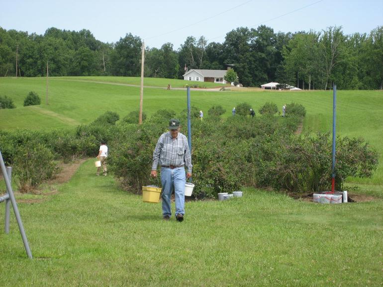 Rolling Ridge Berry Farm - A Saturday Picking Day at Rolling Ridge Berry Farm