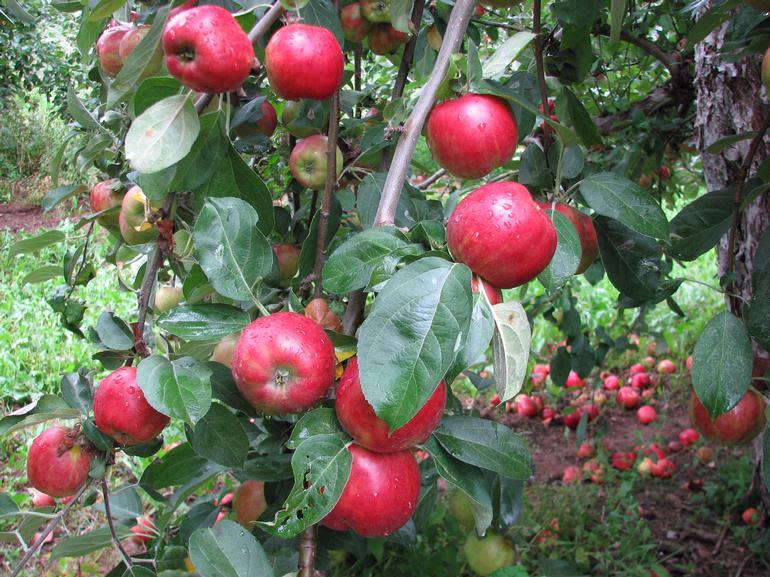 Dempsey Corner Orchards Farm Market  & U-Pick - Image 3