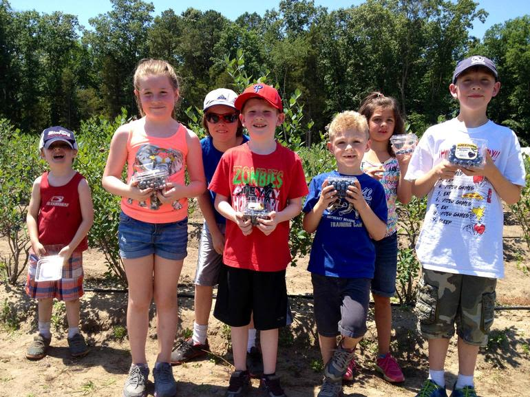DiMeo Farms & Blueberry Plants Nursery - Blueberry Picking at DiMeo's Family Blueberry Farms in New Jersey is where kids love to go. Call us now at: (609) 561-5905 to buy large blueberry bushes for sale so you can grow your own blueberries