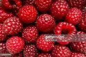 Meadow Mist Farm -  Chemical Free Red Raspberries