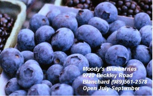 Moody's Blueberries - Image 1