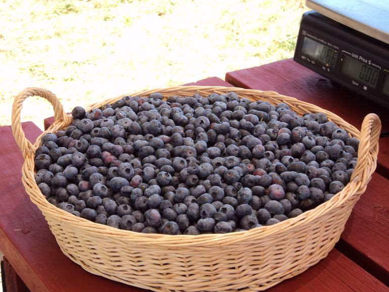 The Blueberry Patch - Image 0