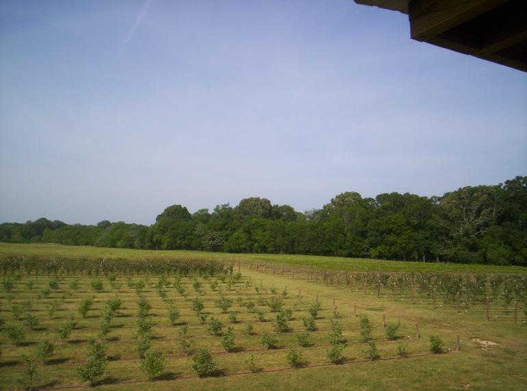 Barber Berry Farm, LLC - Image 2