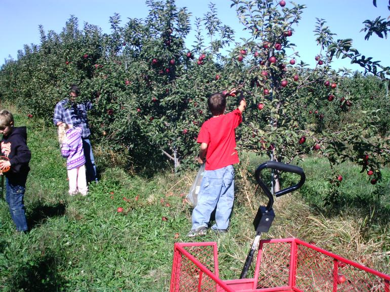 A.W. Overhiser Orchards - U-Pick Apples are the Best!