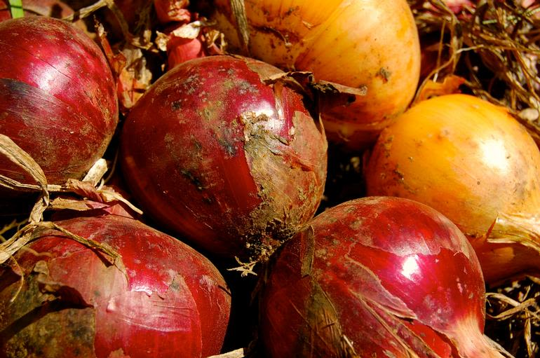 Meadow Mist Farm - MMF Red and Sweet Onions