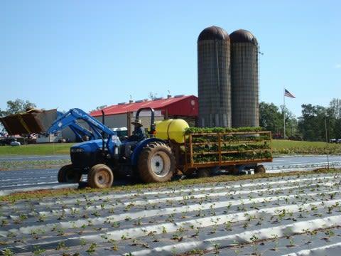 Southern Belle Farm - Image 2