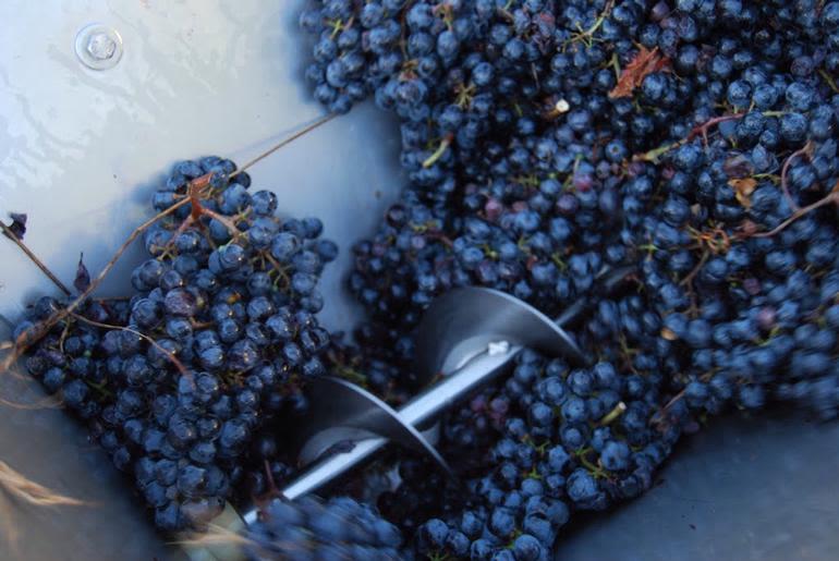 Zoll Cellars Winery - Crushing Grapes