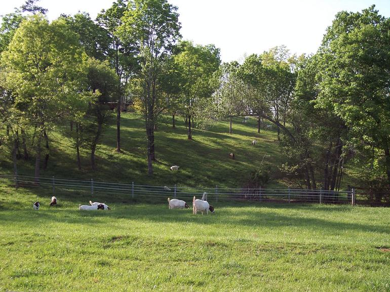 Billy's Goat Hill - Image 0