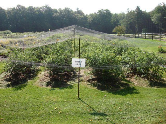 Goulden Ridge Farm - Image 2
