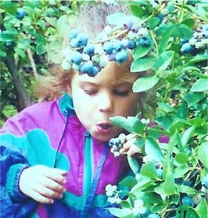 Moody's Blueberries - Image 3