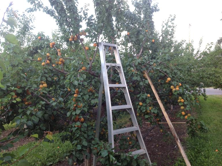 Peter's Orchard - Image 13
