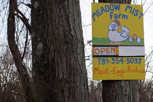 Meadow Mist Farm - Welcome to Meadow Mist Farm 142 Marrett Rd Lexington MA 02421 follow us on meadow-mist.com