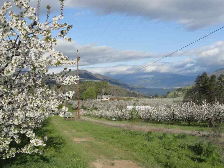 Root Orchards - Image 1