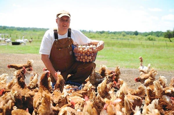 Lake Meadow Farms - Cage Free Chickens