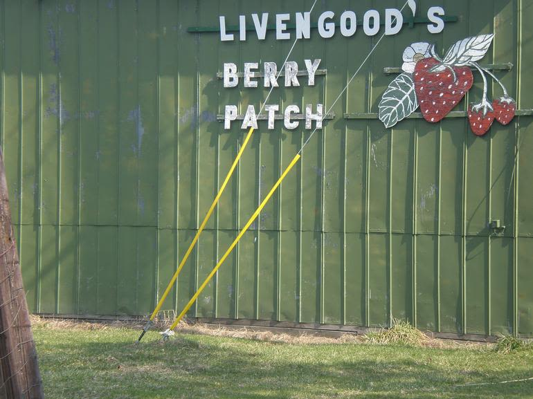 Livengood's Berry Patch - Image 0