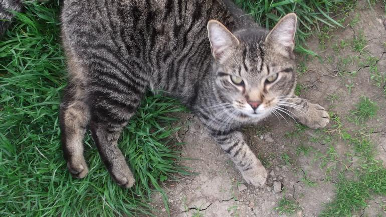 Boulder Belt Eco-Farm - Tuttle, one of our mousers