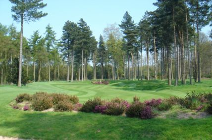 Scenic Tree Lined Greens at Forest Pines