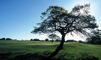 leeds-golf-centre-green-tree